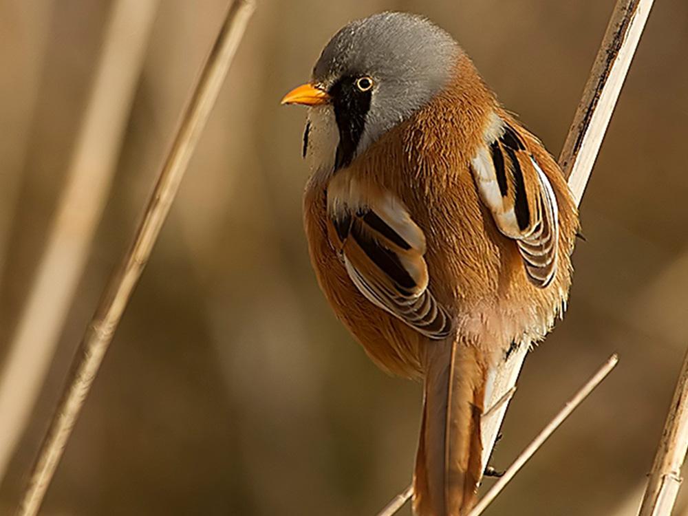 bigotudo birding aragon