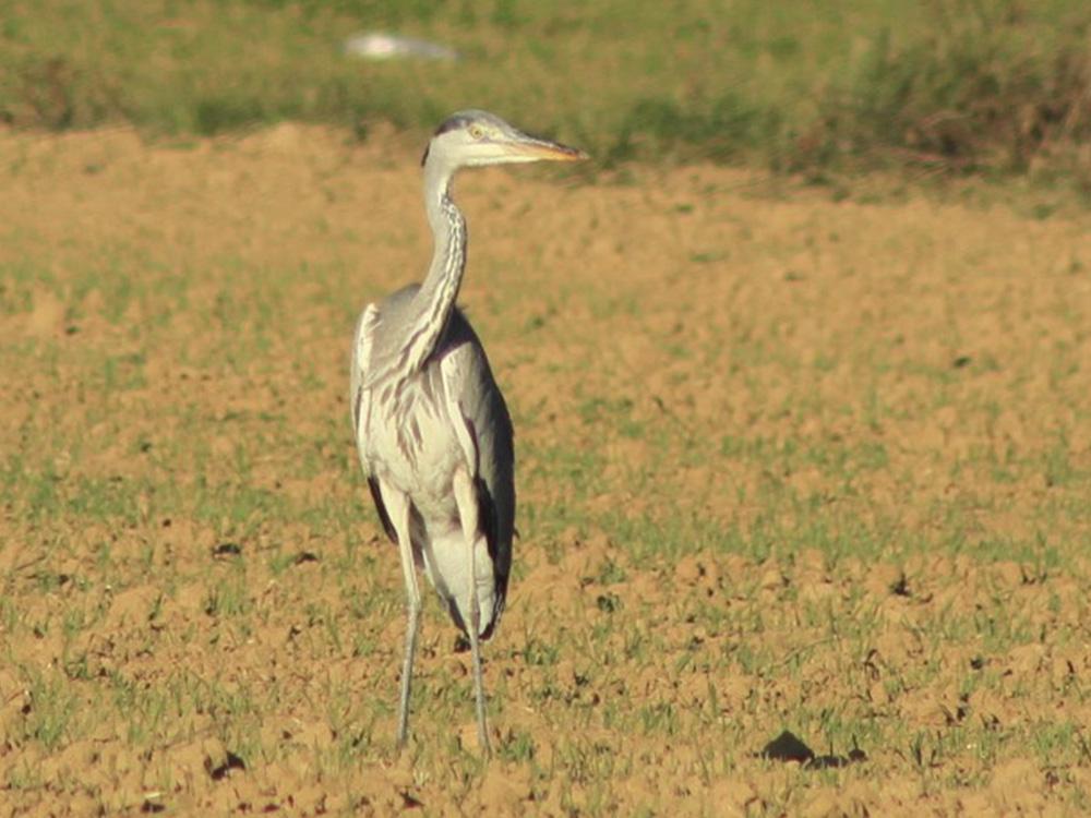Garza Real Birding Aragon