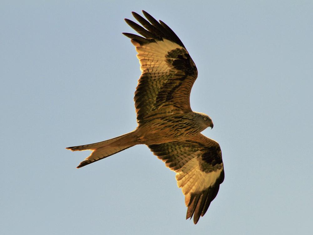 Milano Real Birding Aragon