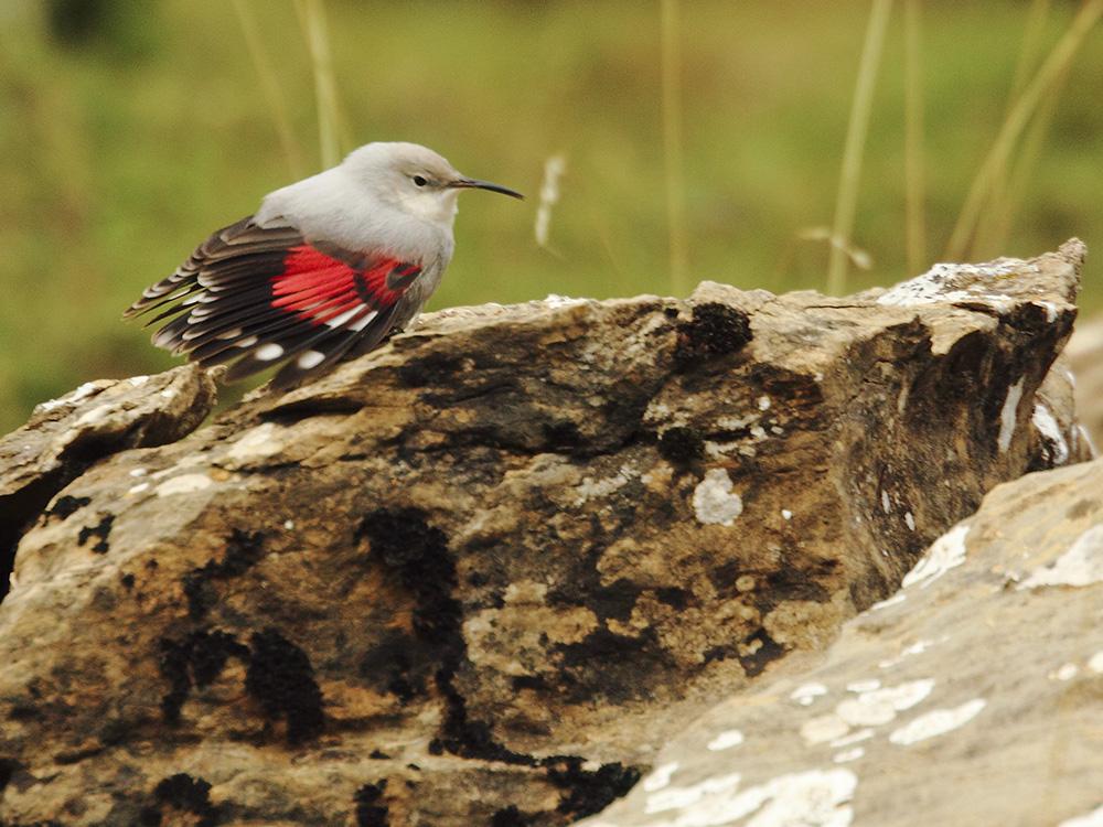 treparriscos aves emblematicas