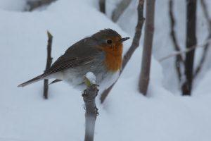Birding Aragon