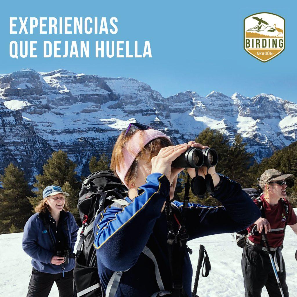 Andar por la nieve con las raquetas y disfrutar observando a las aves en el Pirineo aragonés es una experiencia increíble. Descubre el territorio de Birding Aragón