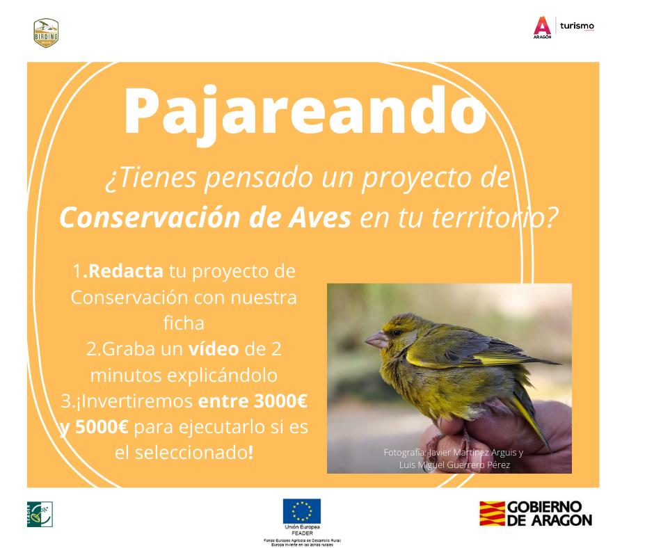 """Birding Aragón lanza dos convocatorias para presentar Proyectos Piloto que trabajen en la Conservación de Aves, """"Pajareando"""", y Educación Ambiental, """"Ciento Volando"""", para acciones relacionadas con la Ornitología."""