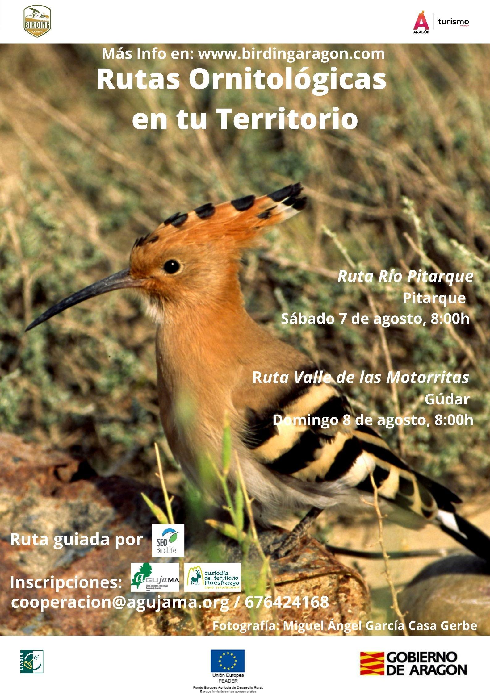 7 de Agosto. Ruta ornitológica en el Río Pitarque (Villarluengo, Maestrazgo) 8 de Agosto. Ruta ornitológica en el Valle de las Motorritas de Gúdar (Gúdar-Javalambre).