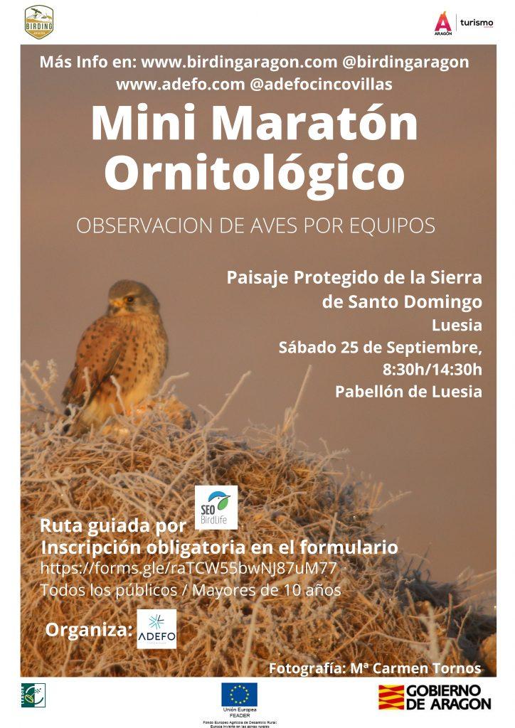 Continúan las acciones de promoción de Birding Aragón, en este caso en Luesia en Cinco Villas, con un mini maratón ornitológico con observación de aves por equipos que tendrá lugar en el Paisaje Protegido de la Sierra de Santo Domingo.